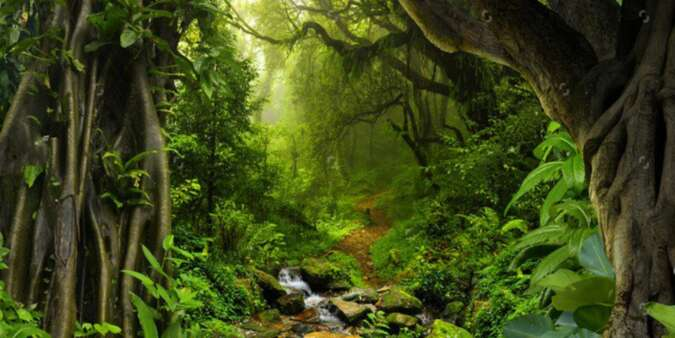 Top 10 Most Beautiful Forests in the World